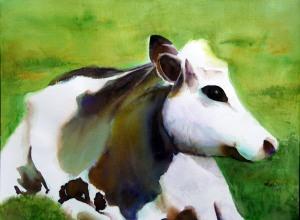 We Grow Happy Cows